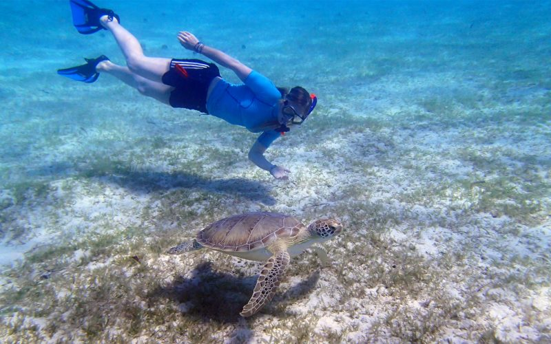 Carribean-turtle-diver